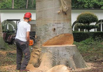 abattage arbre 34